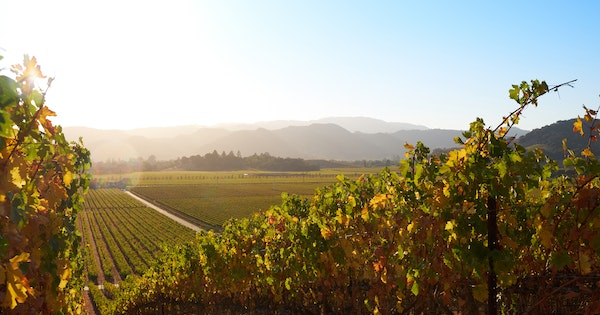 Things to Do in Napa Valley in Fall