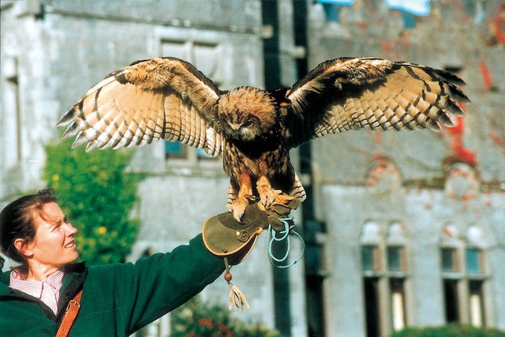 Original falconers at ashford castle.jpg?1520360794?ixlib=rails 0.3