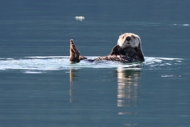 Original sea otter 1772039 960 720.jpg?1491426933?ixlib=rails 0.3