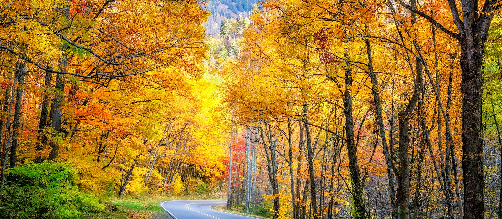 Fall Foliage Map 2020.Fall Foliage Prediction Map 2019 Here S When To Expect Peak