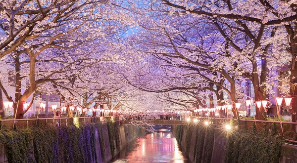 Japan Cancels Cherry Blossom Festivals and More as It Faces Coronavirus Outbreak