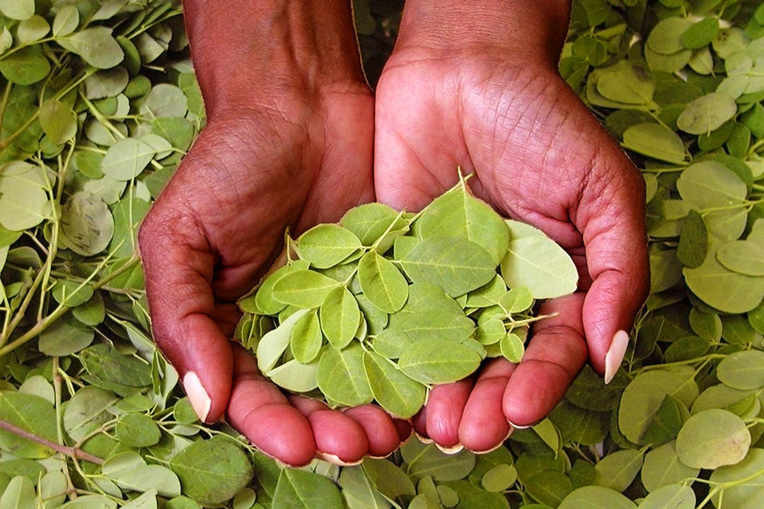 What to Know About Moringa, the