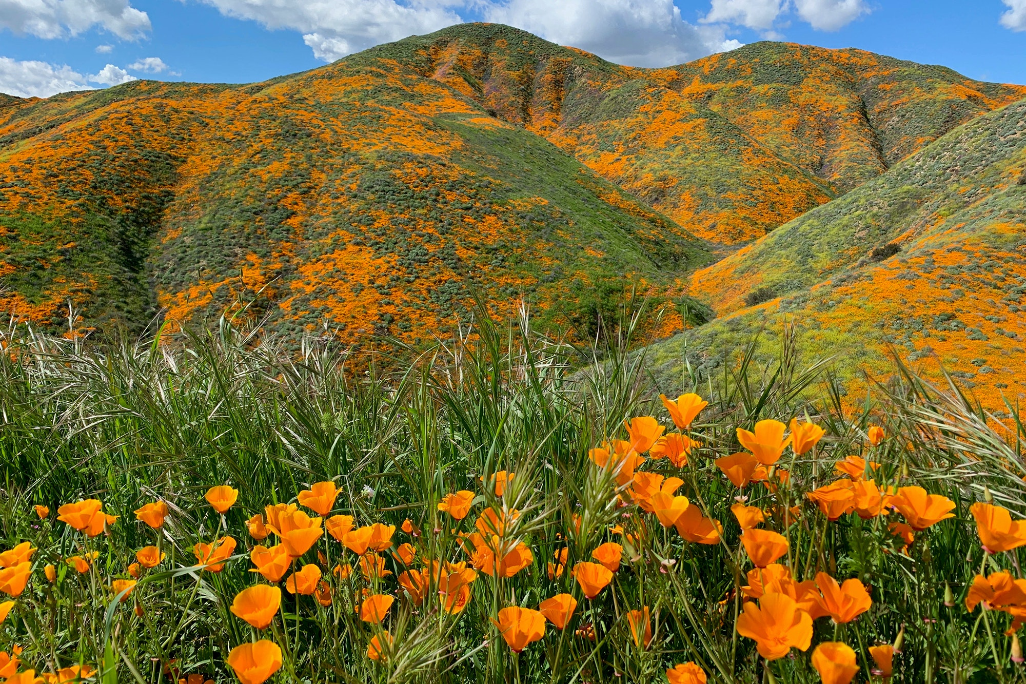 """""""Unbearable"""" Crowds Force California Town to Restrict Access to Poppy Bloom"""
