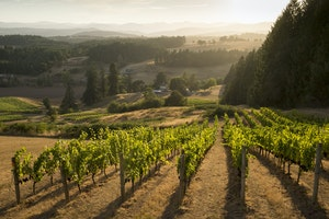 6 of the Best Wineries in Oregon's Willamette Valley