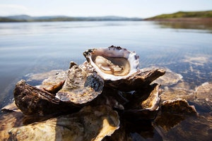 An Oyster Lover's Guide to Ireland