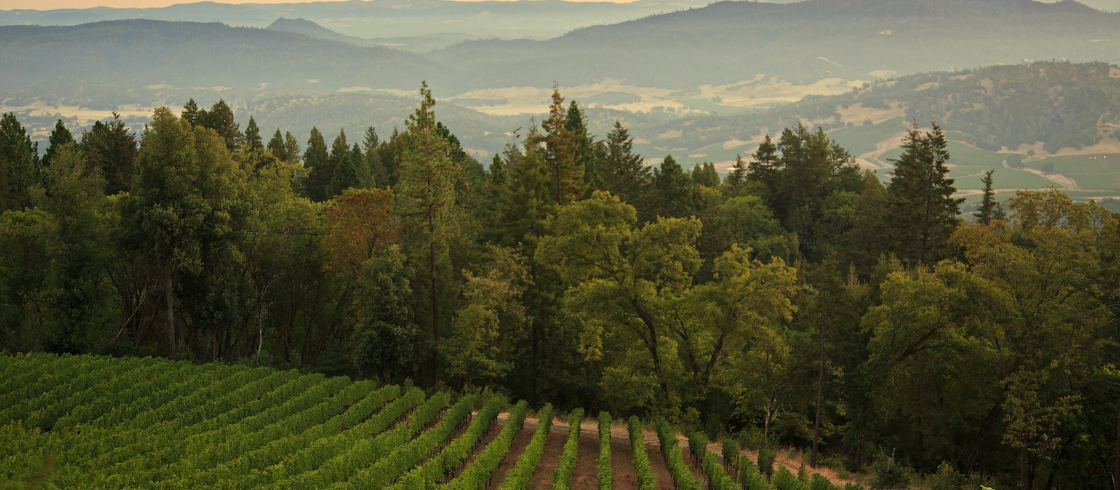 Chef Chris Cosentino recommends a visit to the Clif Family Winery on a trip to Napa Valley.
