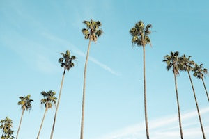 Tips for a Quick Trip to Los Angeles