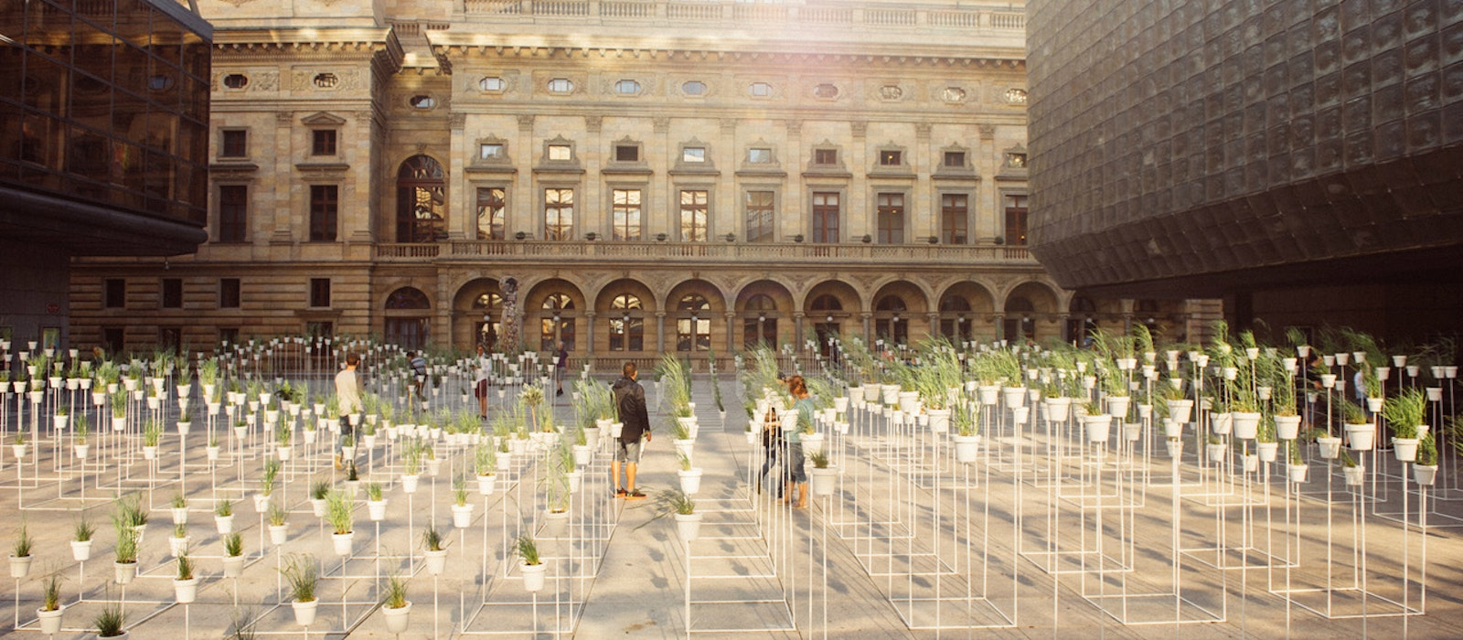 An urban botanical installationdesigned by the founders of Haenke lab