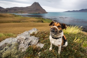 How a Trio of Terriers Helped Rid a Remote Island of the Rats That Were Destroying It