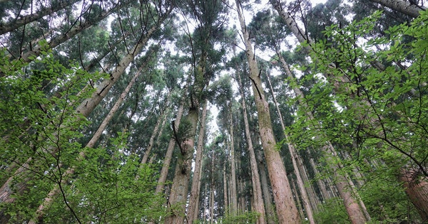 How to Go Forest Bathing in Japan