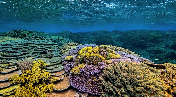 The Future Of The Great Barrier Reef Depends On Us