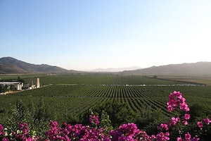 The Secret of Valle de Guadalupe's Wine (R)evolution