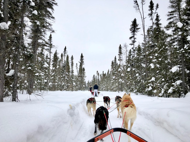 No previous mushing experience is needed for a trip with Chilly Dogs in Ely, Minnesota.