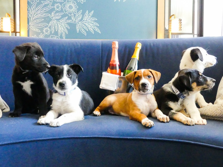 Six to 10 puppies are coming to your hotel room. And they're bringing prosecco.