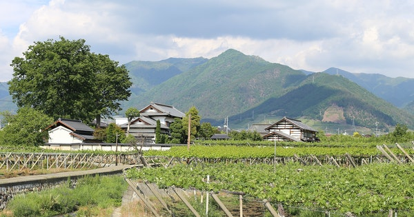 A Wine Lover's Guide to Japan's Koshu Valley