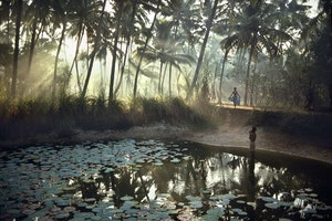 A Kerala Native Journeyed Into Its Jungle. She Returned Speaking a New Language.