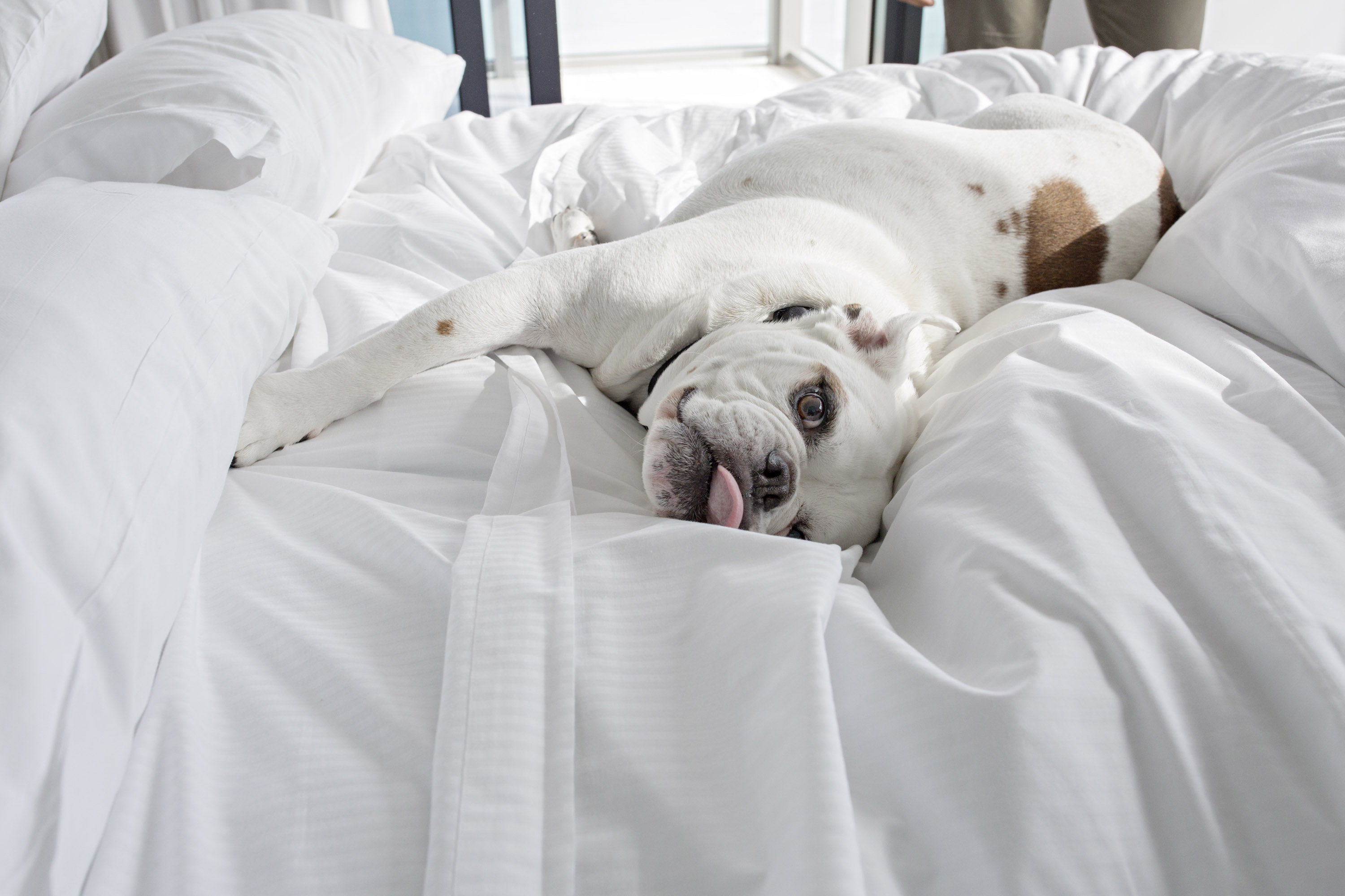 The Best Dog-Friendly Hotels in the United States
