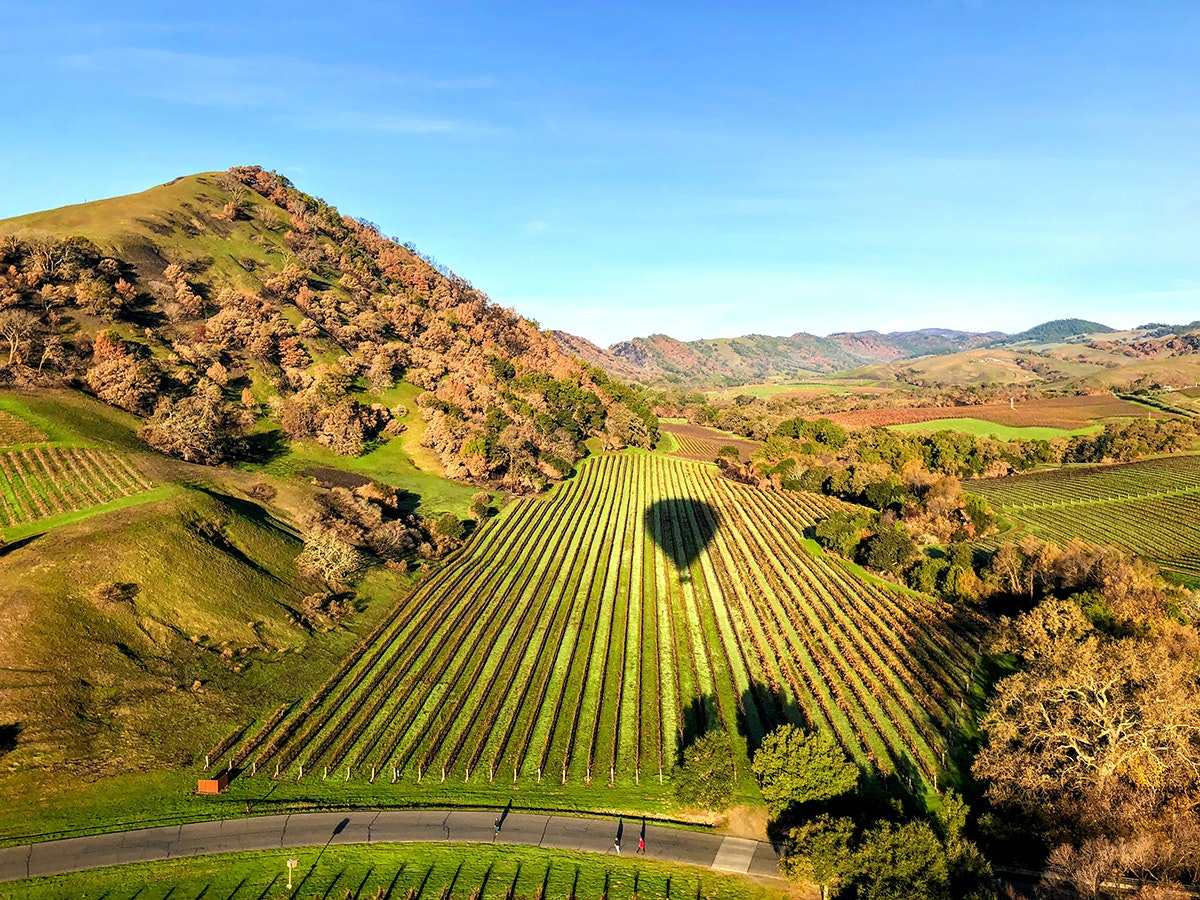 How to Explore Napa Valley's Vineyards—Without Driving