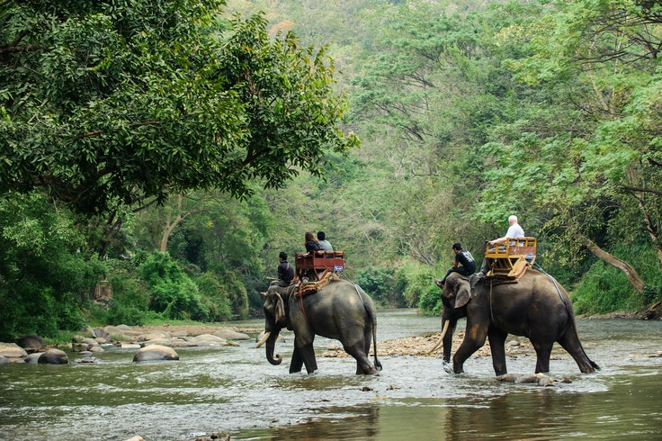 More than 220 travel companies have vowed to stop offering elephant rides.