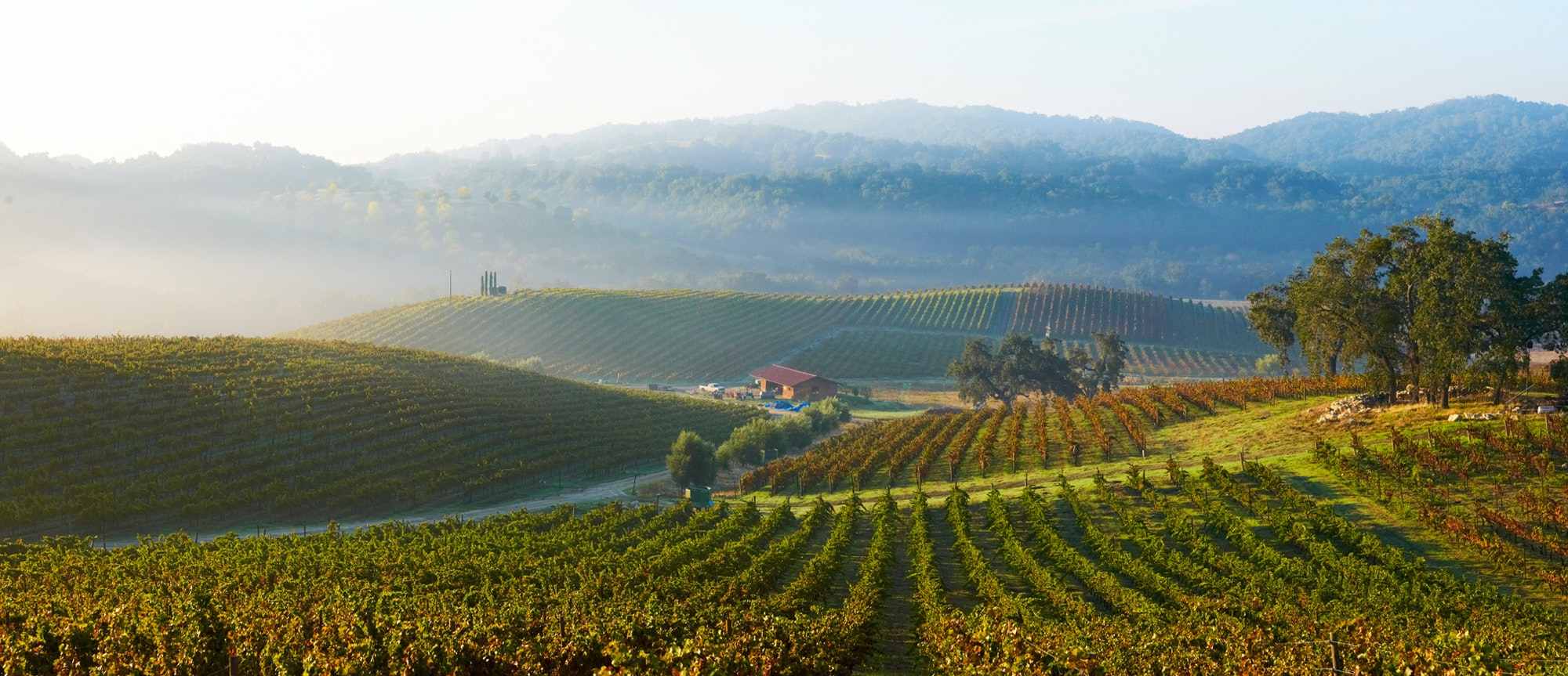 6 Best Wineries in Paso Robles, California