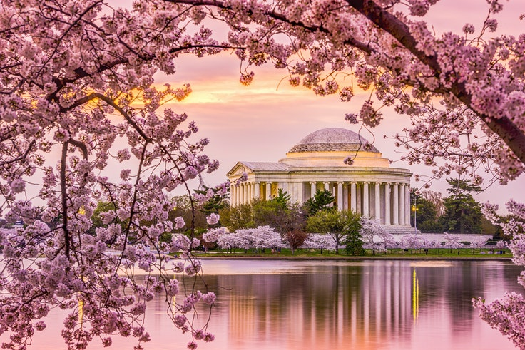 The cherry blossom bloom in Washington, D.C., is just one of the reasons to visit the capital this spring.