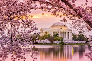 Why You Should Go to Washington, D.C., This Spring