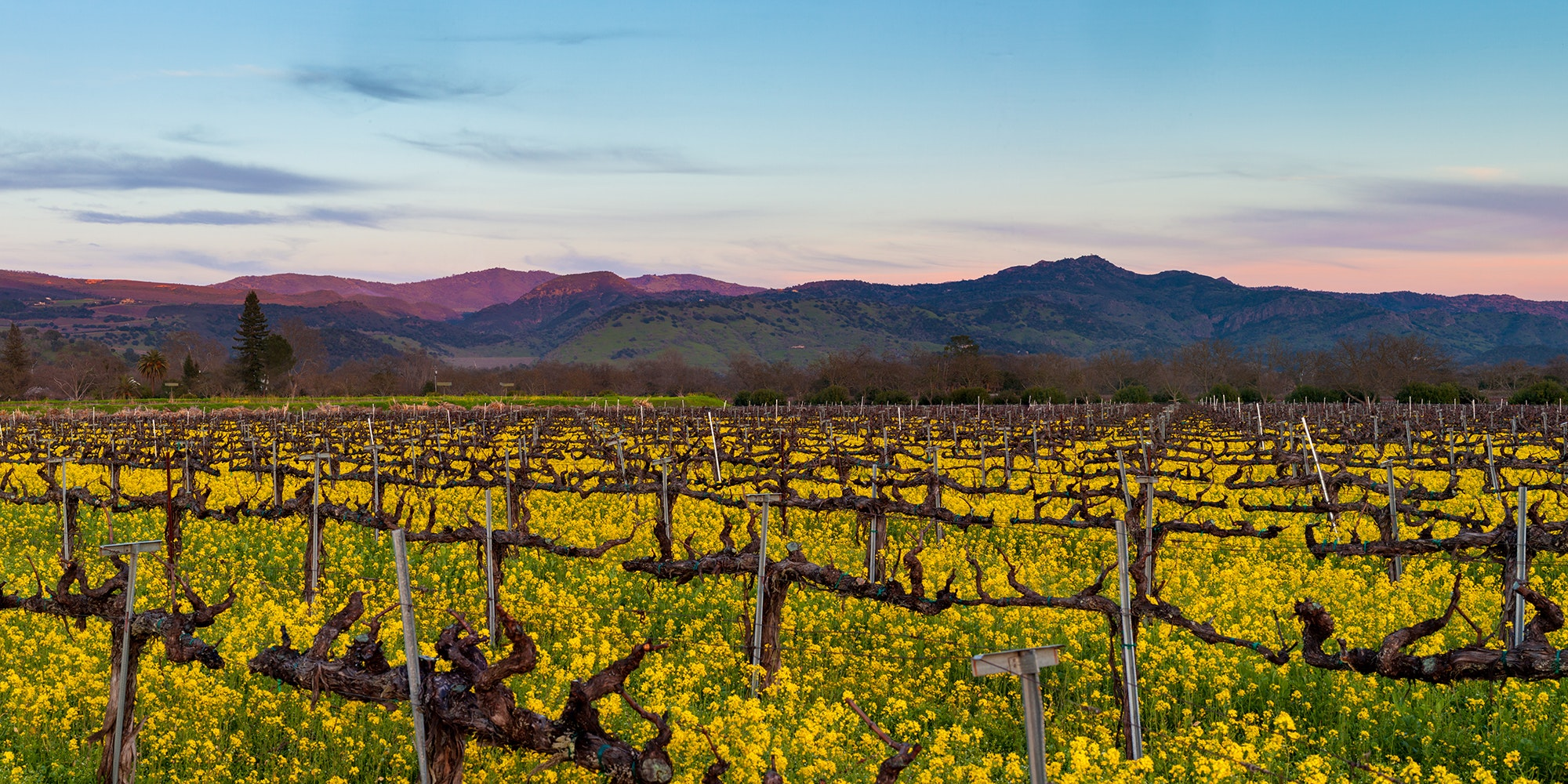Why You Should Go to Napa Valley This Winter