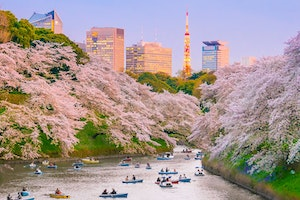Japan's Cherry Blossoms Are Predicted to Arrive Early Again This Year