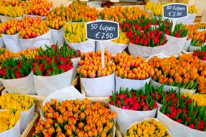 Where to See Spring Tulips in Amsterdam
