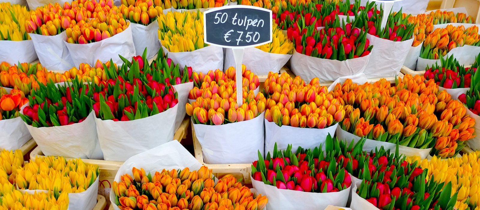 The best time to see tulip fields in Amsterdam is from mid-April to early May.