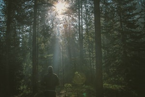 Try Forest Bathing, the New Meditation