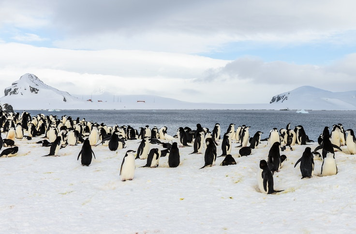 Hoping to see penguins in the wild? Head south to Antarctica.