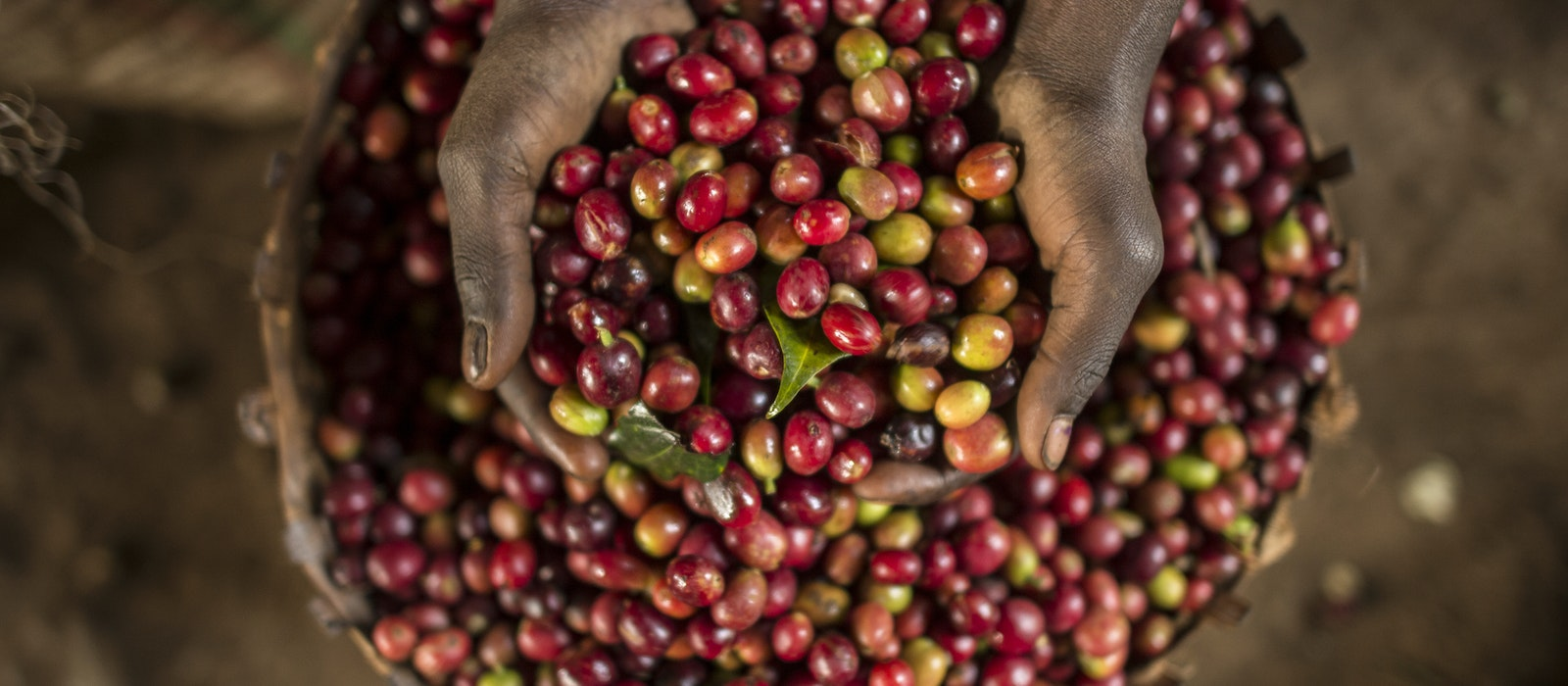 Ethiopia's Kaffa region is considered the birthplace of coffee.