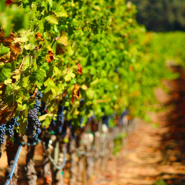 Savor Napa Valley Like a Master Sommelier