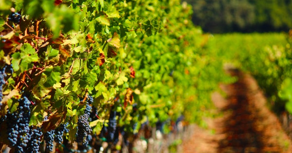 A Wine Expert's Guide to Napa Valley