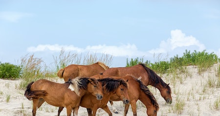 The Remote Coastal Split Where Wild Horses Roam