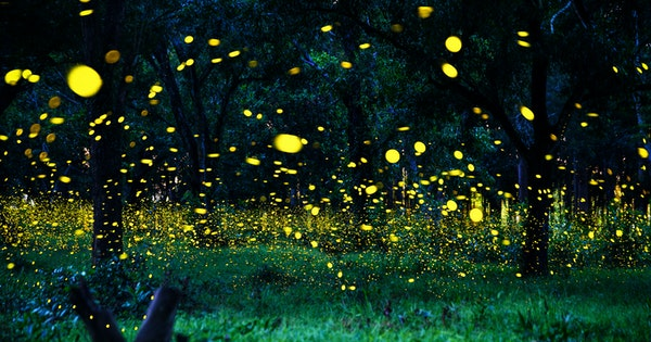 Great Smoky Mountains Announces Dates for Annual Firefly Convergence.