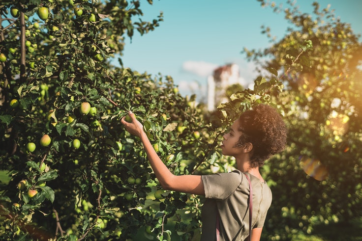 In most public spaces, wild-grown fruits and berries are there for the picking.