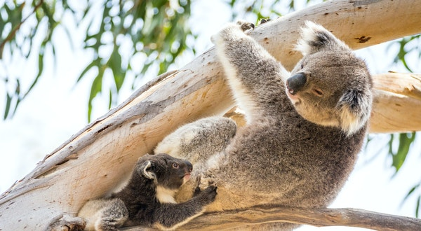 Australian Adventures You Don't Want to Miss
