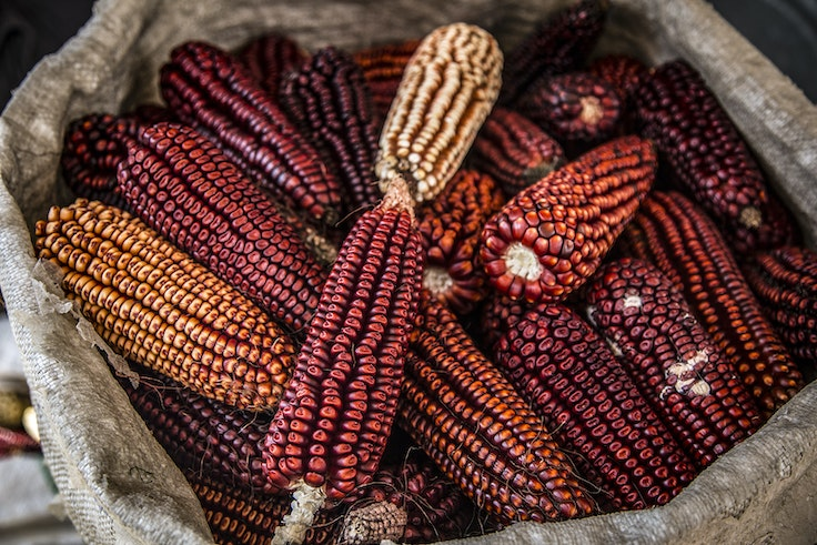 In Mexico City, the value and cultural significance of native Mexican corn is being rediscovered.