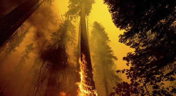 4 Famous Giant Trees Unharmed by Sequoia National Park Fire