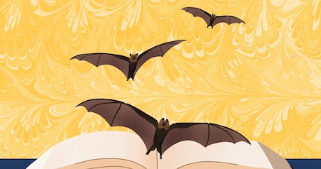 Bats Are Hanging Out in the Library. What Gives?