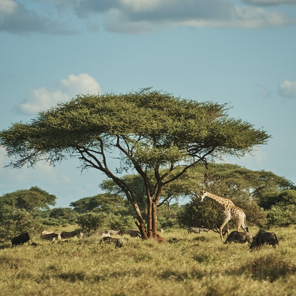A Blind Man's Trip Will Change the Way You Think About Safaris