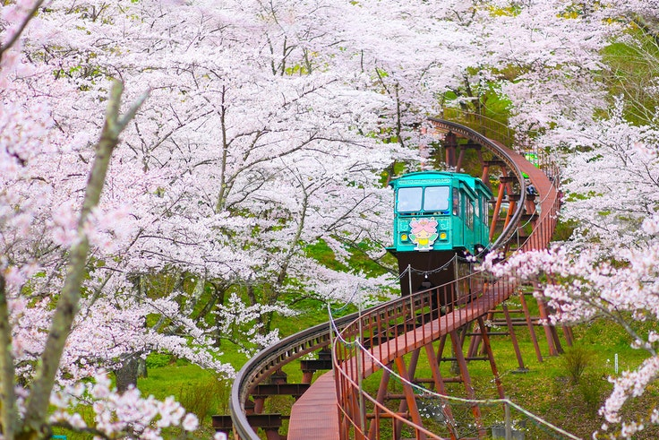 Anyone who wants to visit Japan now through cherry blossom season and beyond will have to pay an exit tax.