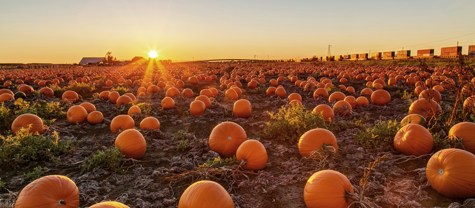 No fall harvest season is complete without some time at a pumpkin patch.