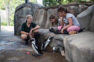 You Can Now Go Face to Face with Endangered Penguins in Chicago