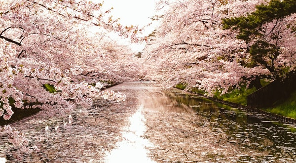 Lesser-Known (and Totally Spectacular) Places to See Cherry Blossoms in Japan