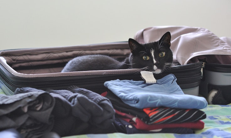 Would kitty fit into your suitcase?