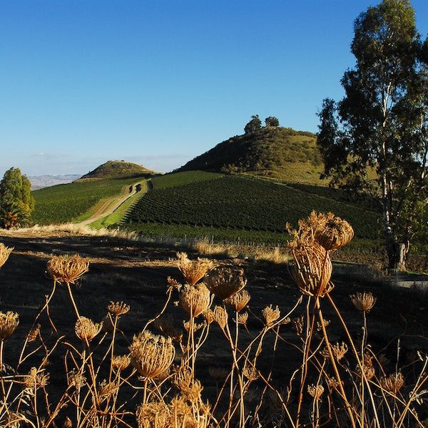 Into the Vines: The Story of Sicily's Top Winemakers