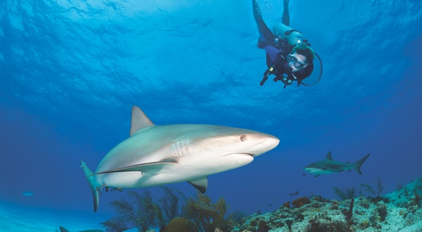 Exploring the Natural Wonders of The Bahamas, below and above the Sea